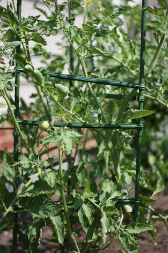 Garden 06-10-10