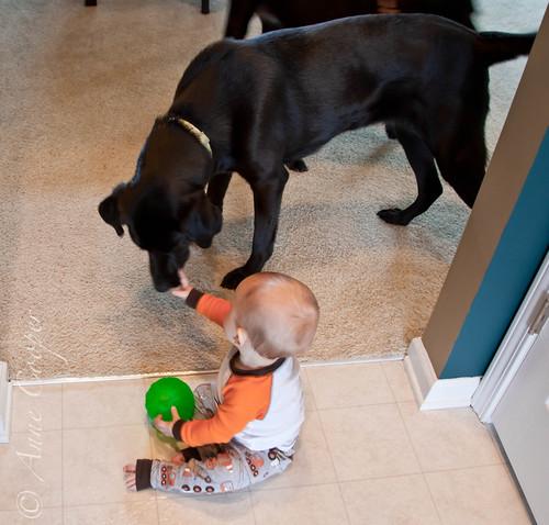 No no, Doggy!