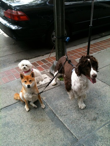 Random dogs in Palo Alto