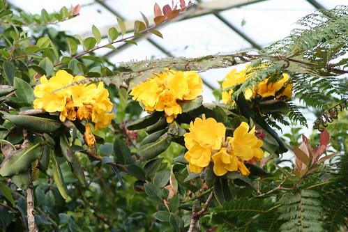 20090919 Edinburgh 20 Royal Botanic Garden 337
