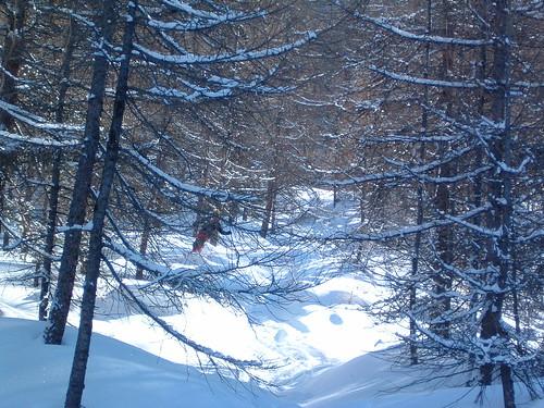 Cima del bosco di j.cr