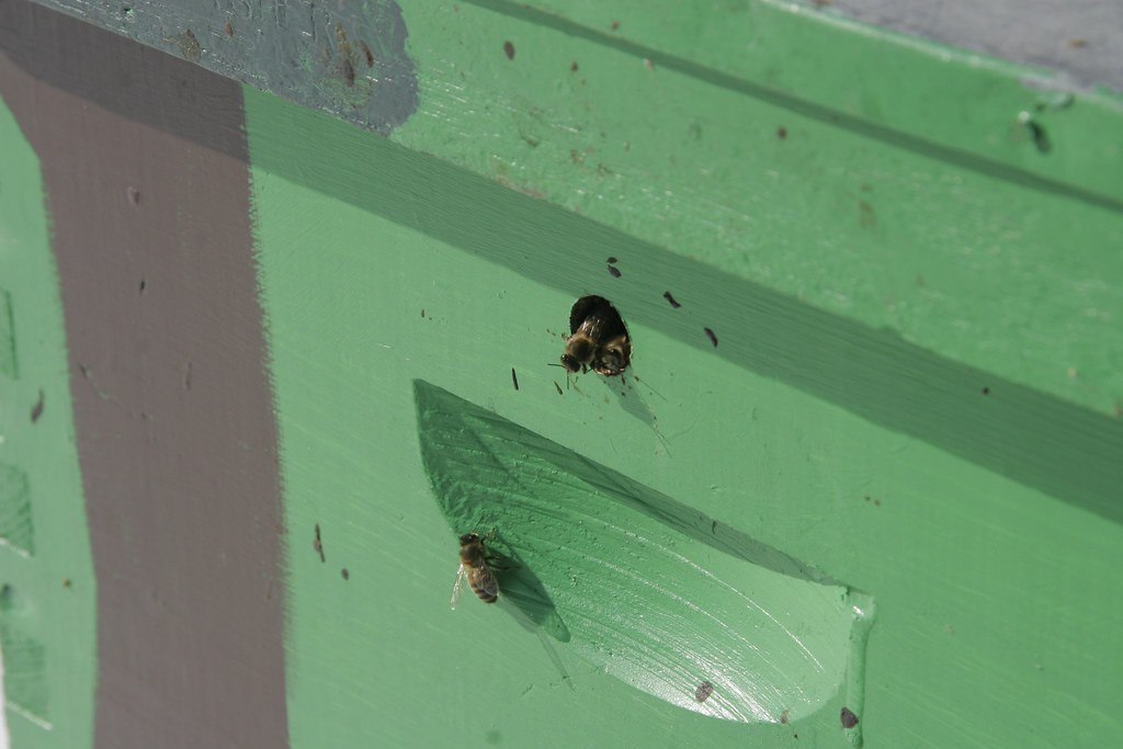 Bees peaking through a hole