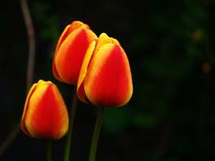 Crayola Flowers