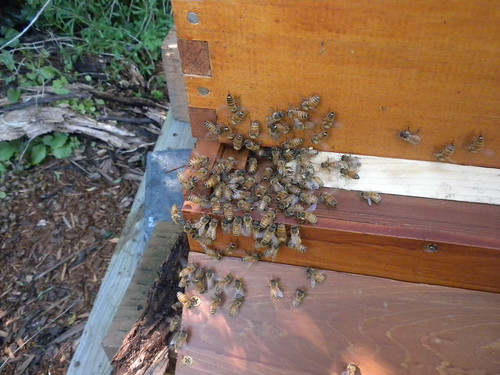 when bees freak out