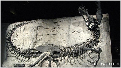 Black Beauty - Tyrannosaurus Rex Fossil Skeleton - Royal Tyrrell Museum