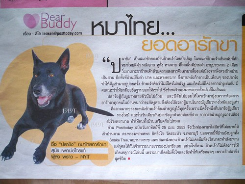 ปลาขิง-Ginger Fish in Posttoday