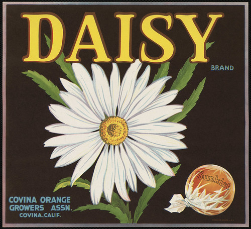 Daisy Brand: Covina Orange Growers Assn., Covina, Calif.