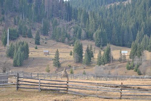 Peisaj Rural Sarul Dornei