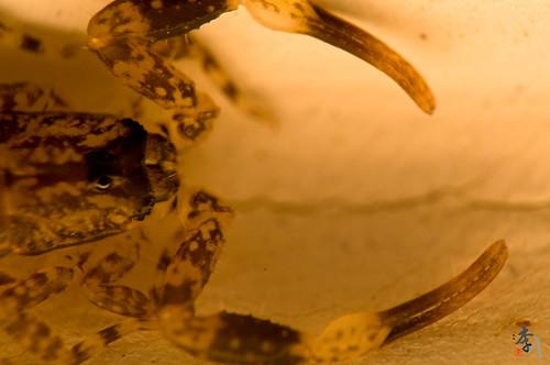 Baby Scorpion-2.jpg