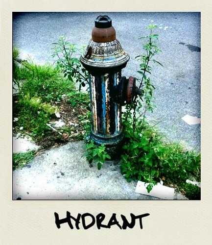 NY hydrant