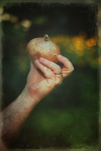 Onion Texture