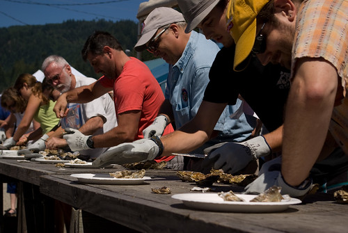 oyster shucking contest