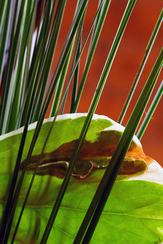rotting leaf by Jonathon Much