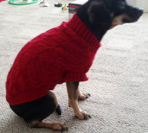 dog sweater 3