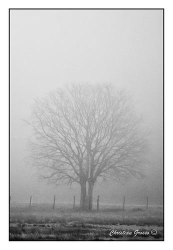 "Niebla en Cañuelas • <a style=""font-size:0.8em;"" href=""http://www.flickr.com/photos/20681585@N05/4975924780/"" target=""_blank"">View on Flickr</a>"