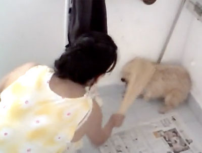 Auntie beating up her dog with a wade of sticks