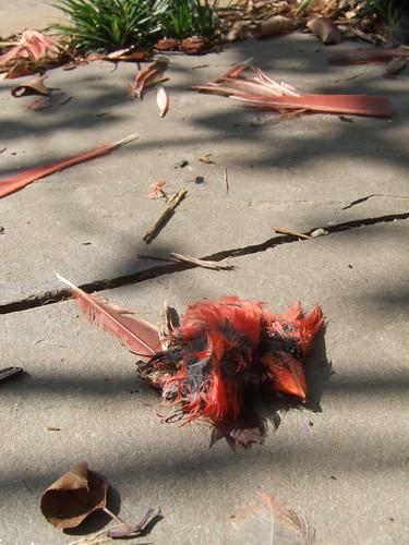Cardinal Death