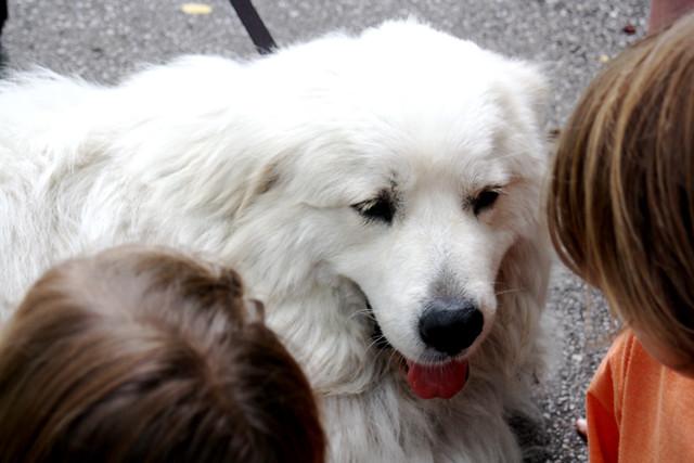 dog love - 3