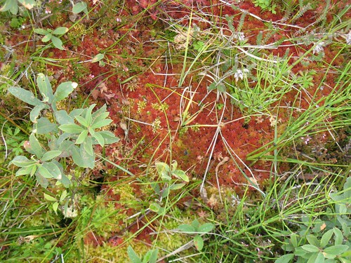 Peat bog flora