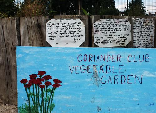 Coriander Club