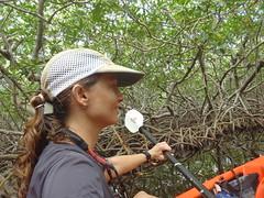 Andi mangrove