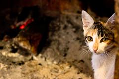 Reptaras con frio (Reptarus) Tags: cats chats agosto gato lugares asuncion fuego froid feu 2010 chimenea