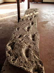 Cast of Footprints, Laetoli Museum