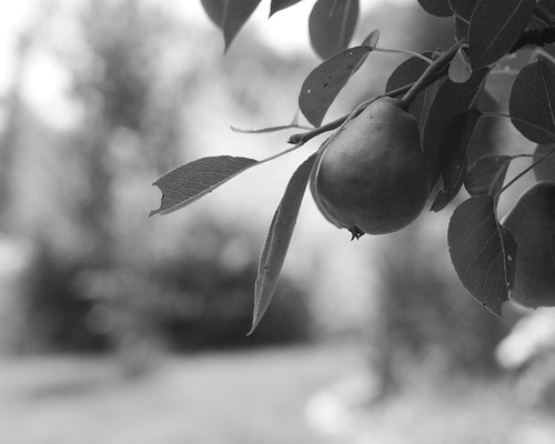 Pear in black and white