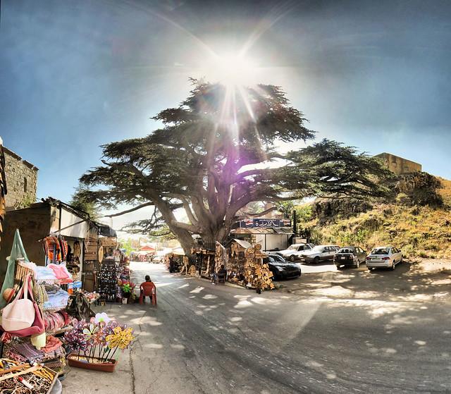 Liban - Les Cèdres - 28-06-2010 - 16h12