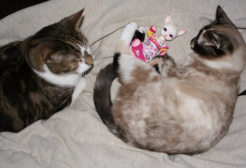 My Cats, Rabbitt & Bella with my doll, Phyzzlpyph