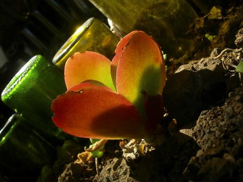 20100626_garden_back50