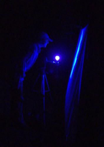 Examining a blacklit moth sheet