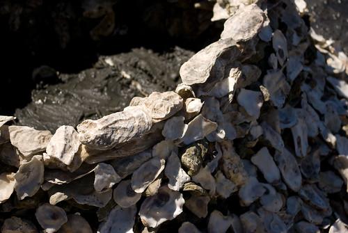 oyster shell sculpture