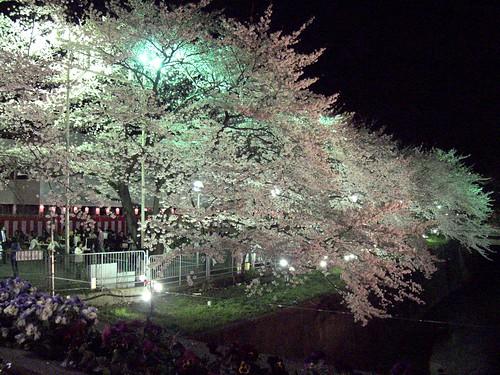 Toshimaen Sakura Illumination