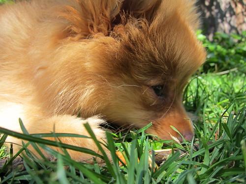 Cutie Babby Georgie
