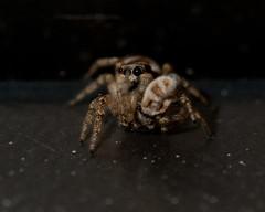 Rude Spider