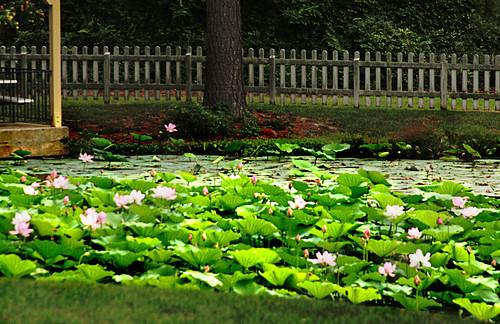 365-216 Water Flora