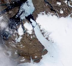 Ice Island calves off Petermann Glacier