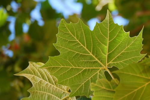 backside of leaves