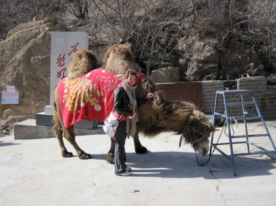 Sneeky Camel Pic!