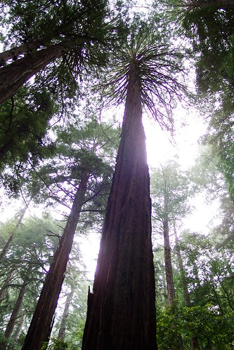 In the Muir Woods