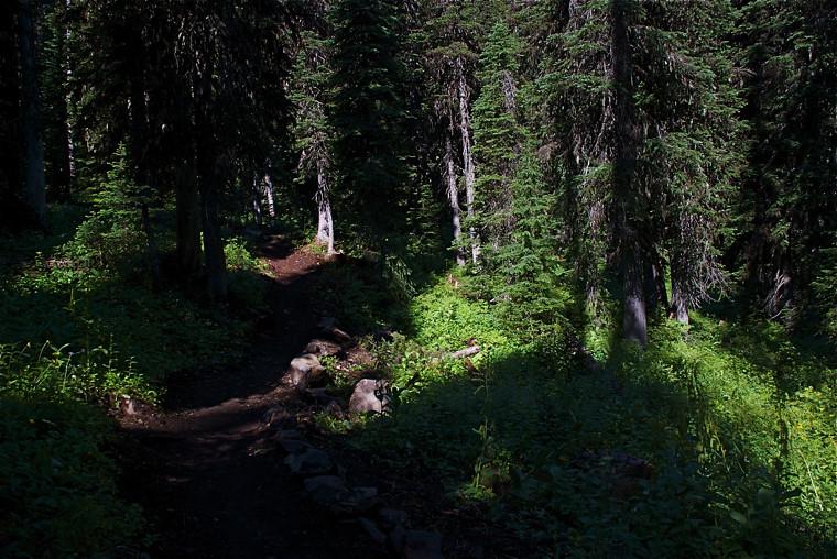 USFS Trail 460
