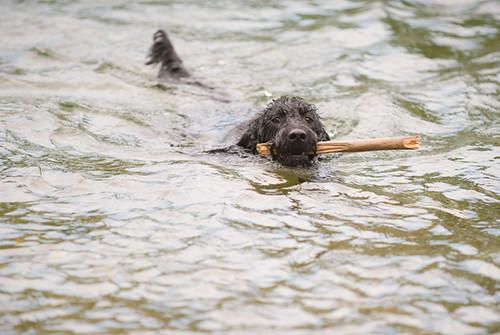 Luna likes to swim