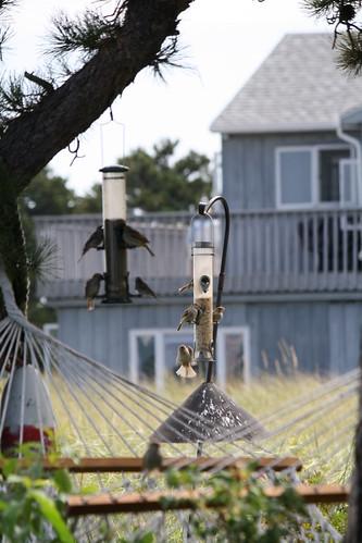 busy birdfeeders