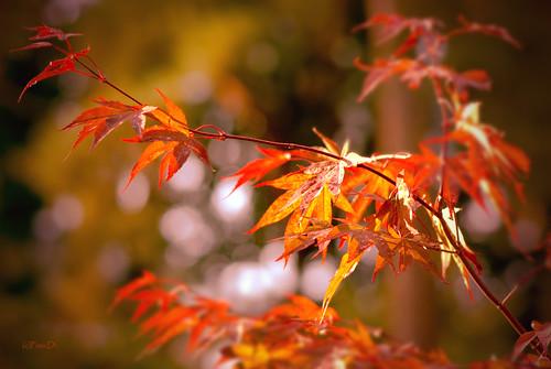 Erste Herbstfarben 2010