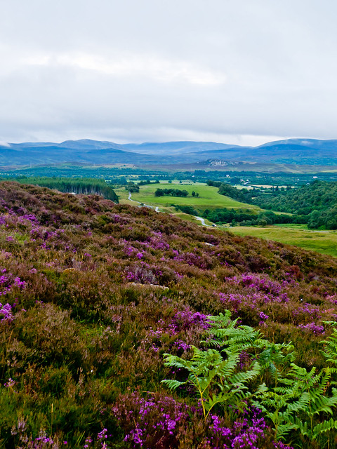 Heather on Creag an Loin