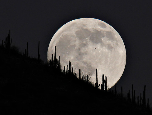 Tucson moonrise by SearchNetMedia