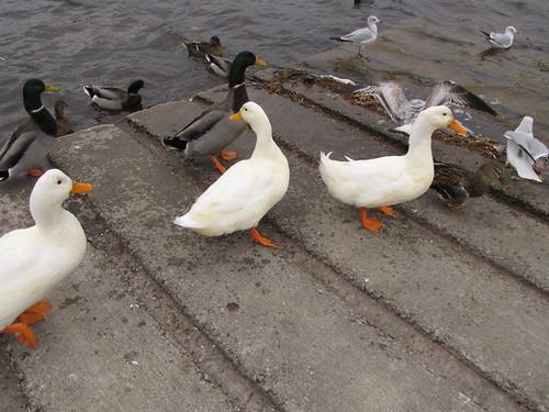 327/365 Duck Feeding