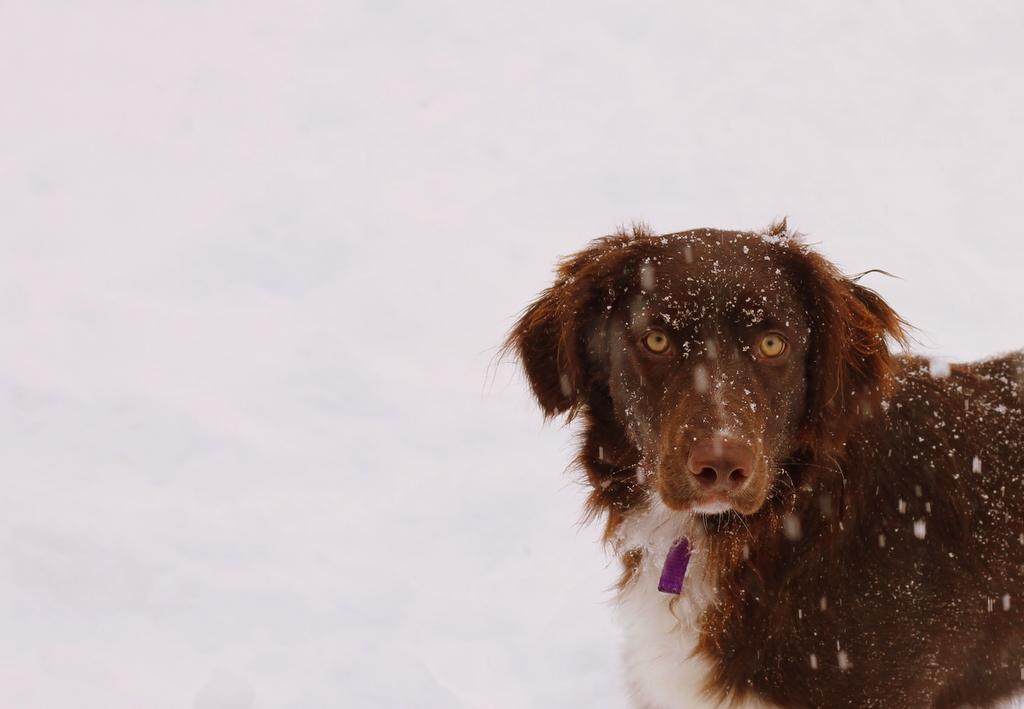 Stella hearts snow