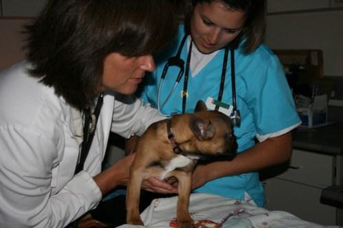 Ema during her cardiac ultrasound